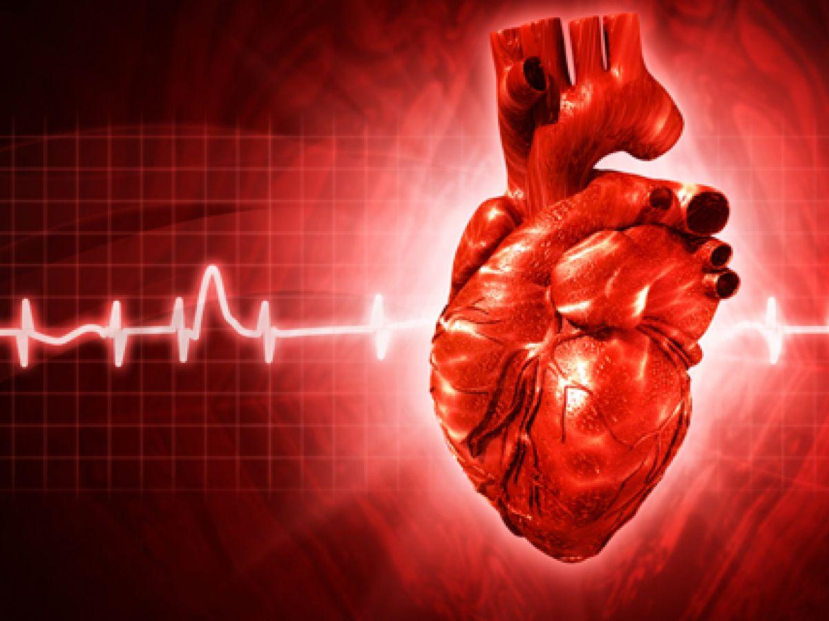 El ayuno intermitente mejora la salud al fortalecer los ritmos diarios